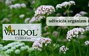uczucie zdenerwowania - validol - Validol